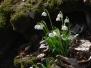 Ebbs - Blütenwanderung